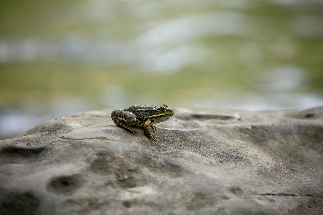 Wildlife Photography - Zahra Farajasri